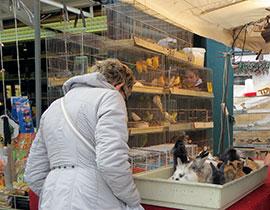 Antwerpen_markten-Vogelenmarkt-k.jpg