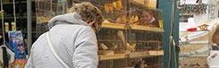 Vogelenmarkt, de bekendste markt van Antwerpen